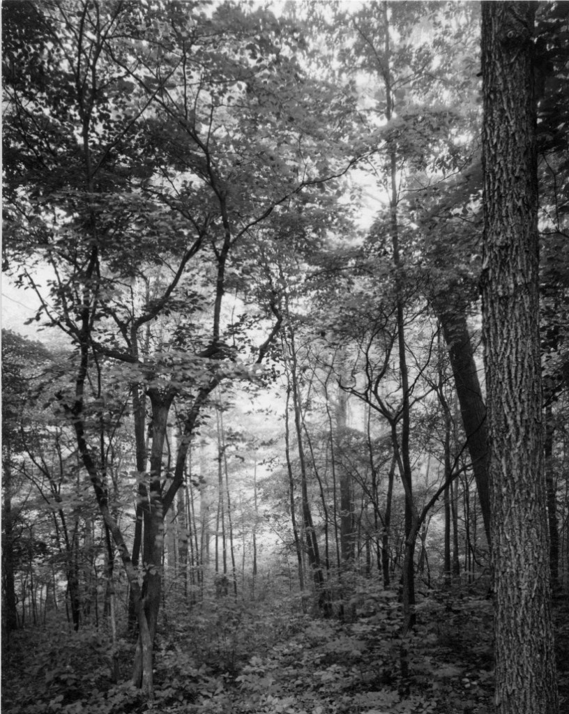 mark tiedemann morning forest